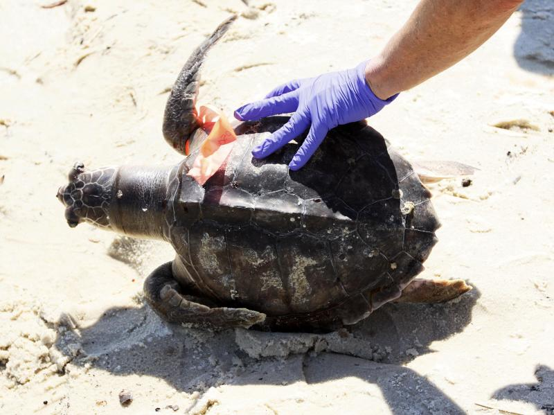 Florida Navy Veteran Beaten For Trying To Save Turtle