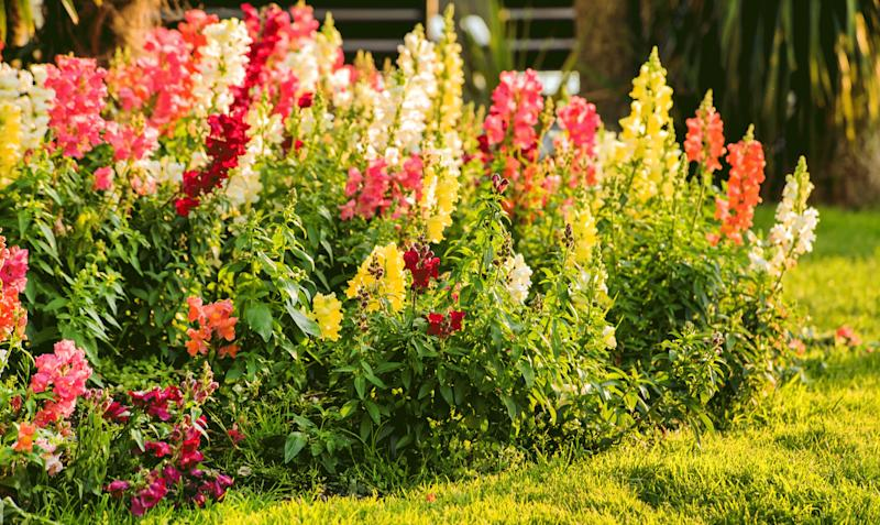 Here's How To Grow Your Own Bouquet With A Cut Flower Garden