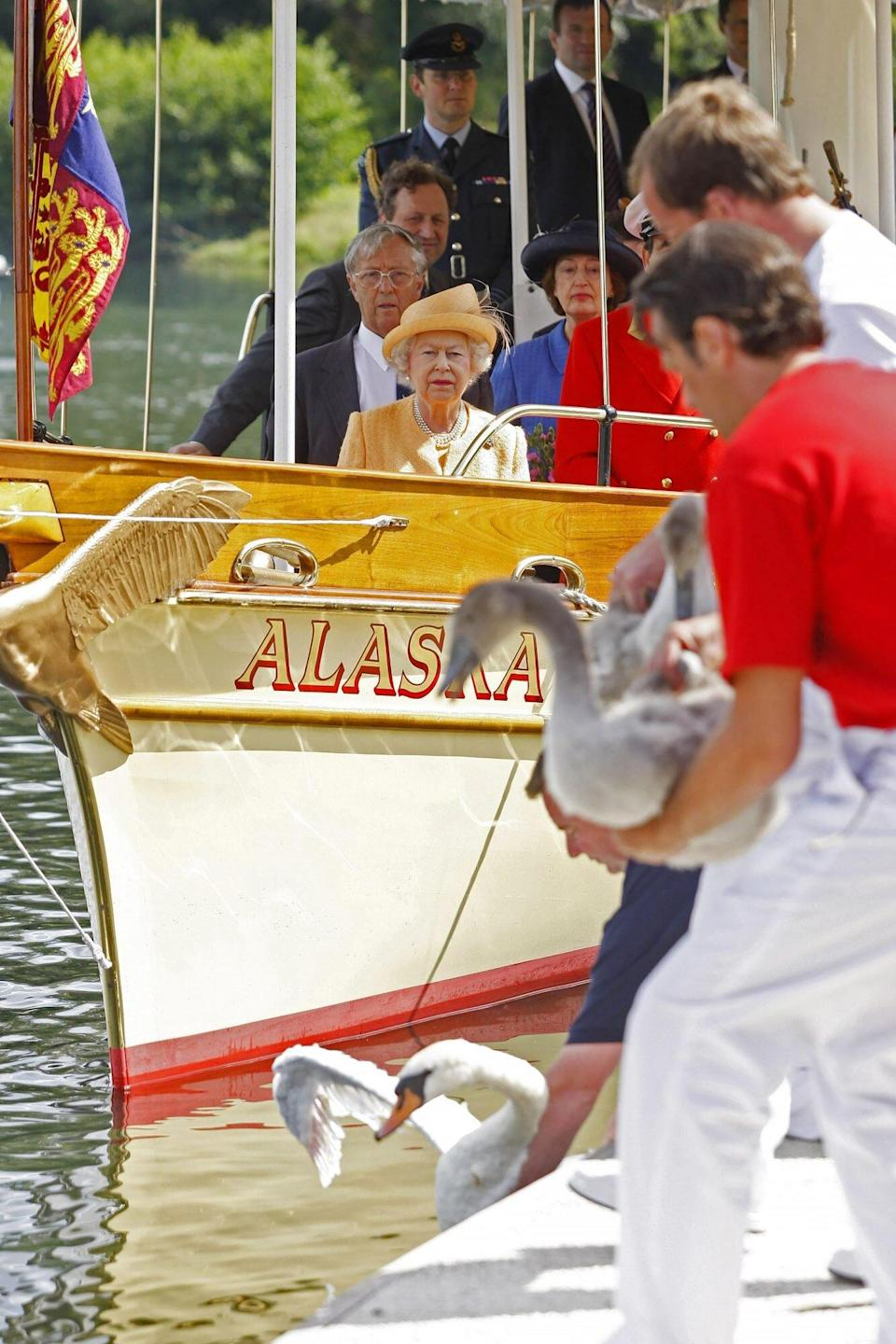 The queen attends the annual swan upping