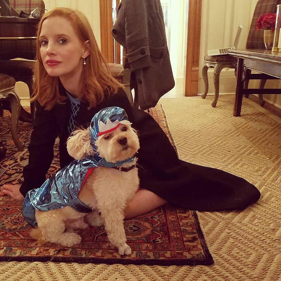 """<p>The actress turned her favorite canine, three-legged dog Chaplin, into a superhero: """"Halloween game faces."""" (Photo: <a rel=""""nofollow"""" href=""""https://www.instagram.com/p/BMH2z-wB0jJ/?taken-by=jessicachastain&hl=en"""">Instagram</a>) </p>"""