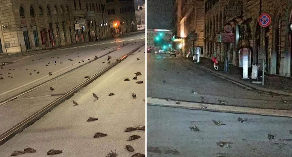Scenes of dead birds on the streets of Rome