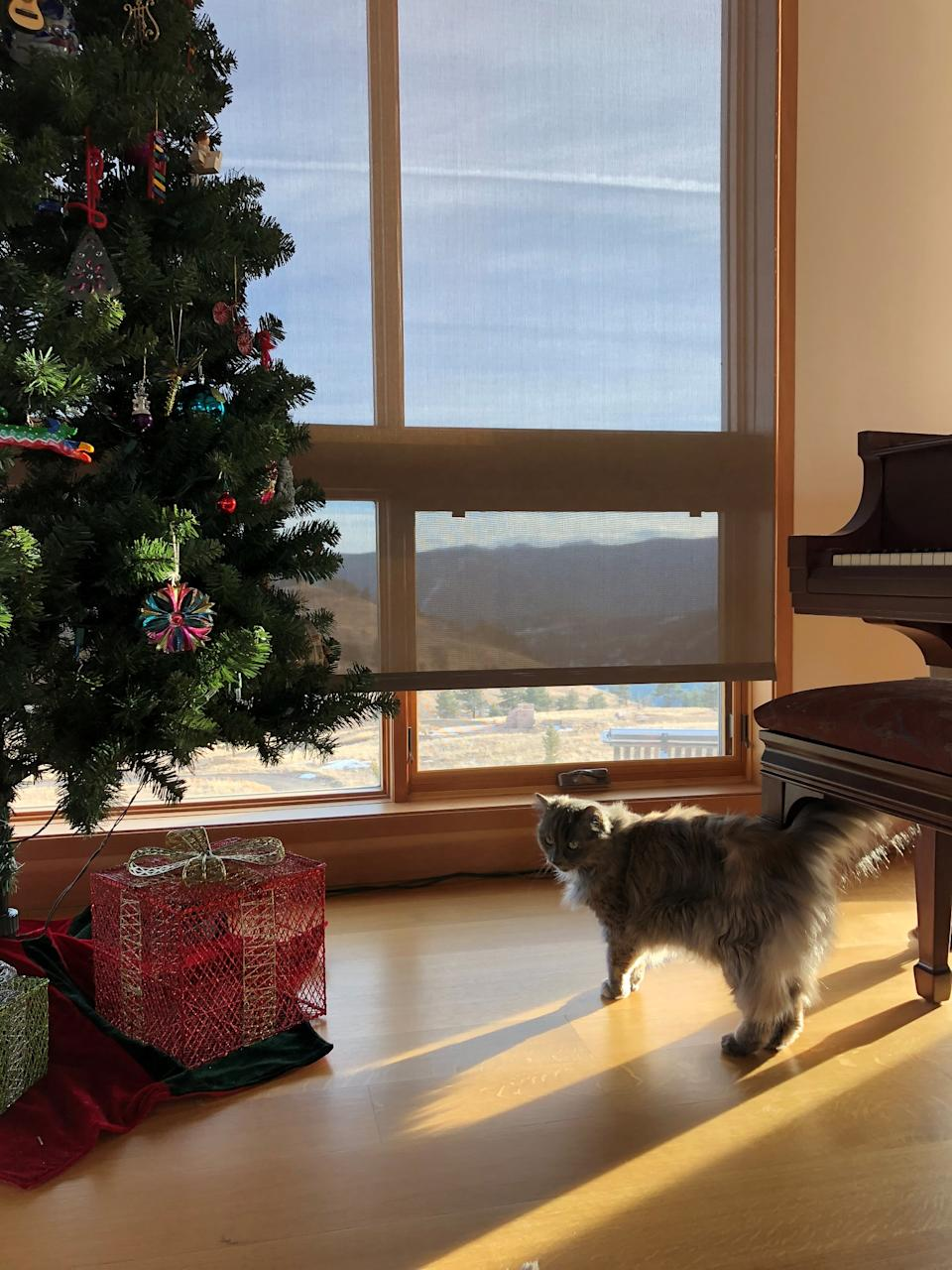 Madolline has managed to spend Christmas in far-flung locations for free, in exchange for keeping some furry friends company. Photo: Madolline Gourley