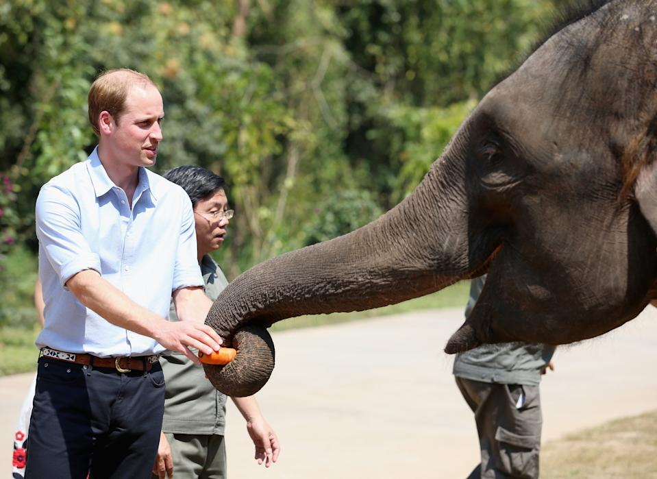 William helping feed an elephant in China in 2015. (Getty Images)
