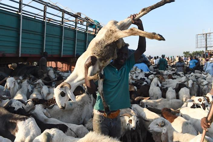 Nigerian livestock traders and buyers said the sale of rams for the annual festival of sacrifice have dropped sharply compared with last year (AFP Photo/Pius Utomi Ekpei)