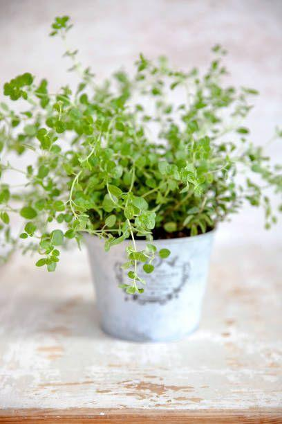 """<p>Thyme likes hot, dry conditions and soil that isn't too rich. It's incredibly easy to grow in full sun (it even tolerates some shade), and most varieties spread quickly. </p><p><strong>How to use:</strong> Thyme's antimicrobial activity may help relieve coughs and cold symptoms. Make a tea by pouring a cup of boiling water over a tablespoon of fresh leaves, and steep for 10 minutes. Drink several times a day. It's lovely in sauces and chicken dishes. </p><p><a class=""""link rapid-noclick-resp"""" href=""""https://www.amazon.com/Sow-Right-Seeds-Planting-Instructions/dp/B07H7SCFX8/ref=sr_1_5?dchild=1&keywords=thyme+seeds&qid=1610464512&sr=8-5&tag=syn-yahoo-20&ascsubtag=%5Bartid%7C10063.g.35264165%5Bsrc%7Cyahoo-us"""" rel=""""nofollow noopener"""" target=""""_blank"""" data-ylk=""""slk:SHOP THYME"""">SHOP THYME</a></p>"""