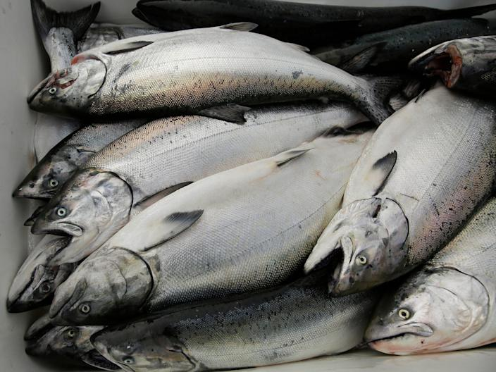 Chinook salmon is seen after being unloaded at Fisherman's Wharf in San Francisco.