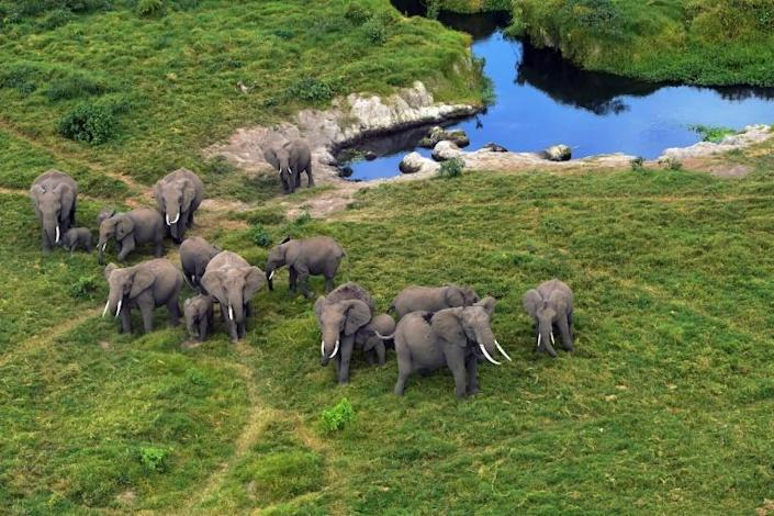Elephants likes these in Kenya's Amboseli National Park, will enjoy more protection from being taken to Western zoos (AFP Photo/TONY KARUMBA)