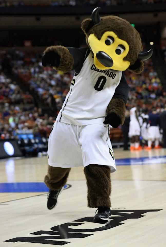 AUSTIN, TX - MARCH 22:  The Colorado Buffaloes mascot Chip performs during the second round of the 2013 NCAA Men's Basketball Tournament at The Frank Erwin Center on March 22, 2013 in Austin, Texas.  (Photo by Stephen Dunn/Getty Images)