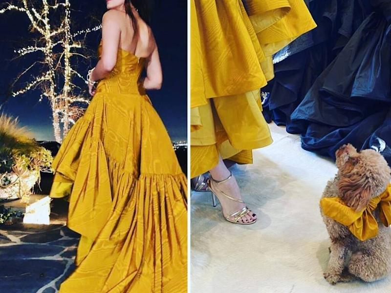 Sandra Bullock's dog matched her Golden Globes gown with custom bow