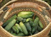 <p>Cucumbers are a fast growing, high yielding garden crop. Certain varieties that grow on vines require more space for planting; those varieties that grow on bushes require less space. For those who live in USDA Hardiness Zones 5-6, you can start growing cumumbers from seed in March to be transplanted outdoors between April and June. For those who live in USDA Hardiness Zones 7-10, you can sow cucumber seeds directly outside two weeks after the last frost.</p>