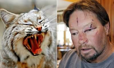 Bobcat In Garage Mauling Had Rabies