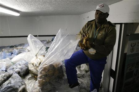 A conservation official holds abalone confiscated from suspected poachers in Cape Town