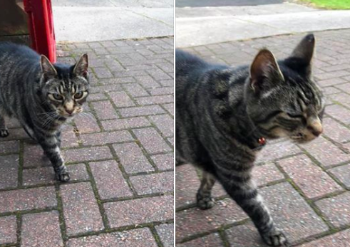 Feline adventurous: The tabby cat frequently pops up in towns miles apart.
