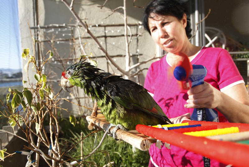 """In this photo taken on Tuesday, Feb. 8, 2012, Mira Tweti, Executive Director, National Parrot Care & Cage Xchange, gives a bath to a rescue parrot named """"Liberty,"""" in her apartment in the Marina Del Rey area of Los Angeles. (AP Photo/Damian Dovarganes)"""