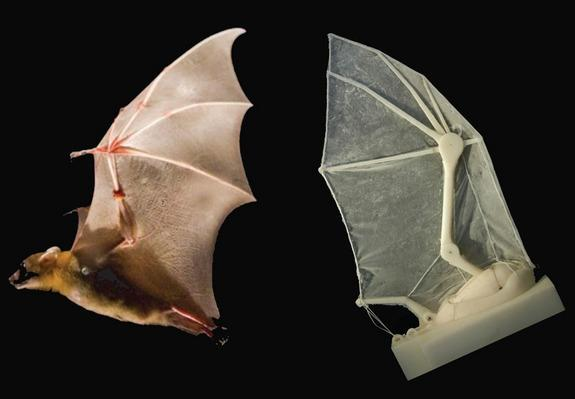 Scientists Build Robot Bat Wing