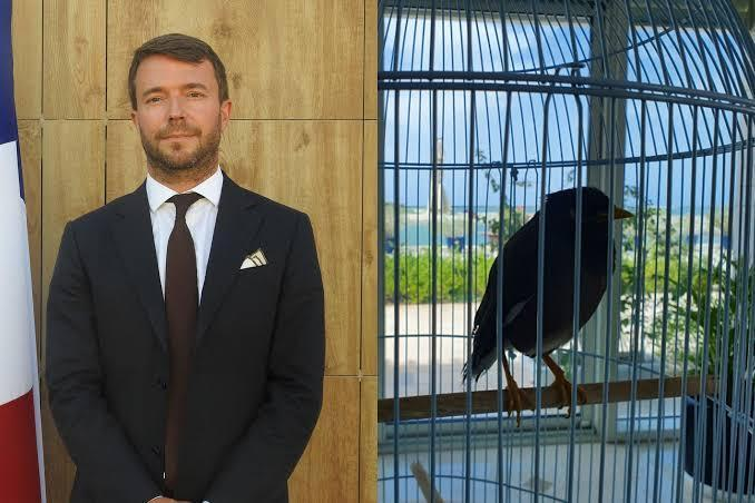 Pet bird evacuated from Afghanistan starts a new life at the French embassy in the UAE