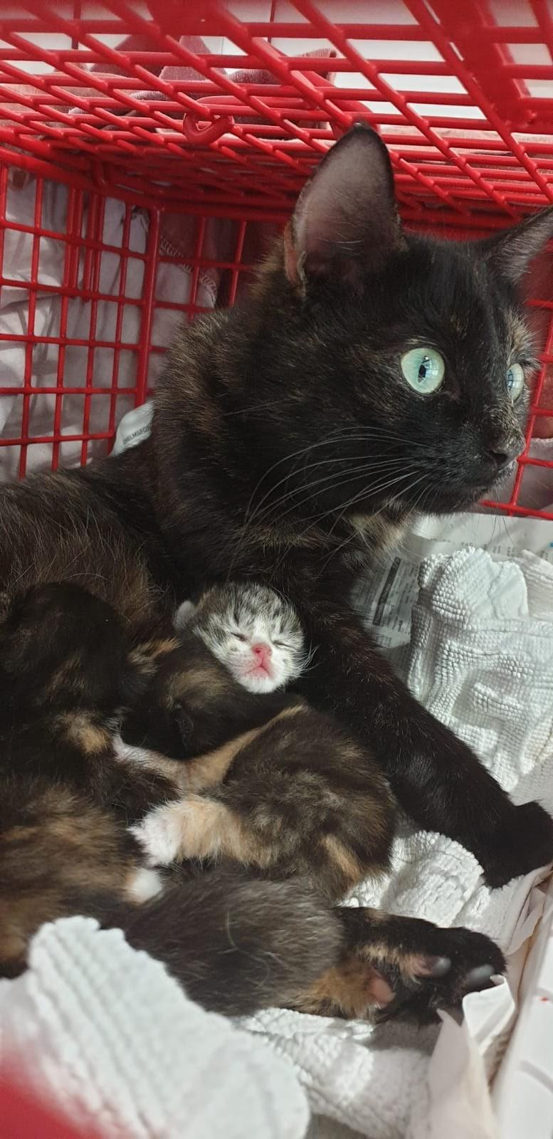 One cat was abandoned while pregnant and has now adopted another abandoned kitten, and taken it into her litter