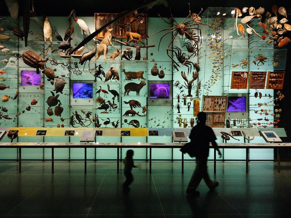 """<span class=""""caption"""">Dans une galerie d'un muséum d'histoire naturelle. </span> <span class=""""attribution""""><a class=""""link rapid-noclick-resp"""" href=""""https://www.flickr.com/photos/76283035@N00/2540634421"""" rel=""""nofollow noopener"""" target=""""_blank"""" data-ylk=""""slk:Dom Dada/Flickr"""">Dom Dada/Flickr</a>, <a class=""""link rapid-noclick-resp"""" href=""""http://creativecommons.org/licenses/by-nc-nd/4.0/"""" rel=""""nofollow noopener"""" target=""""_blank"""" data-ylk=""""slk:CC BY-NC-ND"""">CC BY-NC-ND</a></span>"""