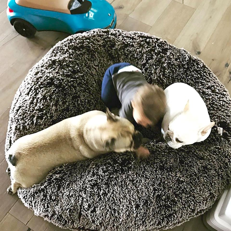 """<p>""""Hey, guys, quick meeting before lunch,"""" the <a rel=""""nofollow"""" href=""""https://instagram.com/p/BS_dYLelqUy/"""">athlete's dogs </a>and son, Boomer, having an important pow-wow</p>"""