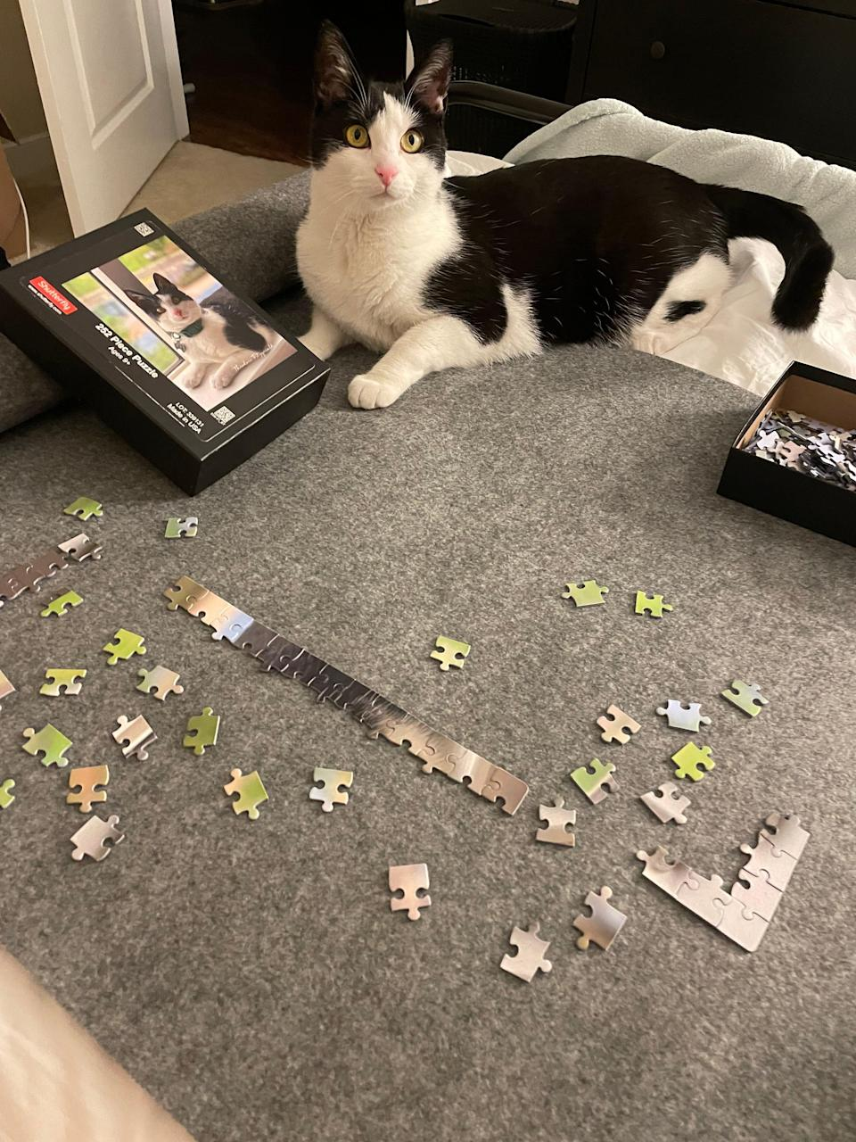 Theodore the puzzle star!