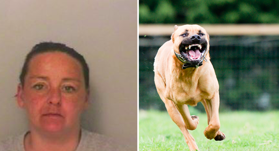 <em>Claire Neal allowed her Staffordshire bull terrier (not pictured) to escape and attack 12 children (Getty/stock photo)</em>