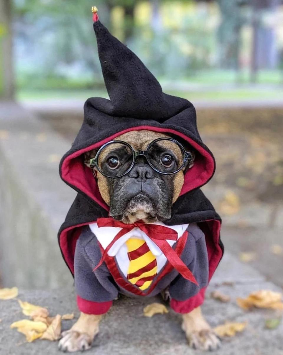 """<p>Get your hound Hogwarts ready with this Harry Potter ensemble. </p> <p><strong>Buy it!</strong> Harry Potter Dog Costume, $55.00; <a href=""""https://www.awin1.com/cread.php?awinmid=6220&awinaffid=272513&clickref=PEO25HalloweenCostumesforDogsthatWillHaveTrickorTreatersHowlingwithJoykbender1271PetGal12909733202109I&p=https%3A%2F%2Fwww.etsy.com%2Flisting%2F456770882%2Fdog-costume-cosplay-halloween-pet"""" rel=""""sponsored noopener"""" target=""""_blank"""" data-ylk=""""slk:Etsy.com"""" class=""""link rapid-noclick-resp"""">Etsy.com</a></p>"""