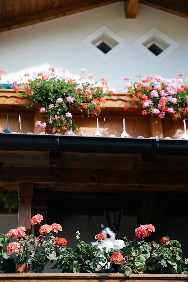 """""""For me, the entire <a href=""""https://www.cntraveler.com/story/driving-the-dolomites-youve-got-an-hour-authorities-say?mbid=synd_yahoo_rss"""">Dolomites</a> region could be distilled down to these flower pots. Every single building had them and I found it to be the most charming thing in the world. In my experience, it is hard to agree with your neighbors on a lot of things, and I liked imagining how the community here all come together over their love for these flowers."""""""