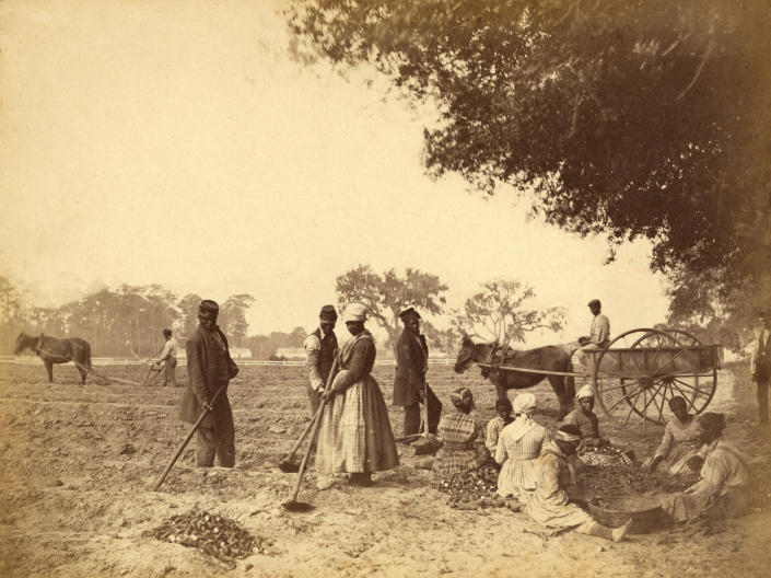 Enslaved people work on a plantation in South Carolina in 1862. (Photo by adoc-photos/Corbis via Getty Images)