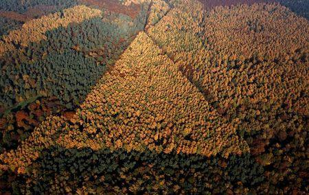 An aerial view shows a mixed forest on a sunny autumn day in Recklinghausen, Germany, in this October 31, 2015 file photo. REUTERS/Ina Fassbender/Files