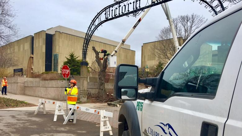Charlottetown's Victoria Row is losing 4 trees