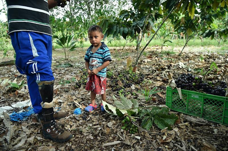 A former Colombian soldier who was displaced during the country's half-century armed conflict stands with his son on his farm near La Hormiga in Putumayo department, Colombia on January 22, 2016