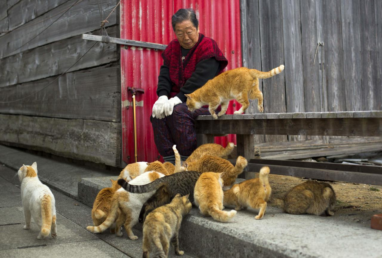 Cats surround a local woman on Aoshima Island in Ehime prefecture in southern Japan February 25, 2015. An army of cats rules the remote island in southern Japan, curling up in abandoned houses or strutting about in a fishing village that is overrun with felines outnumbering humans six to one. Picture taken February 25, 2015. To match story JAPAN-CATS/  REUTERS/Thomas Peter (JAPAN - Tags: SOCIETY ANIMALS TRAVEL)