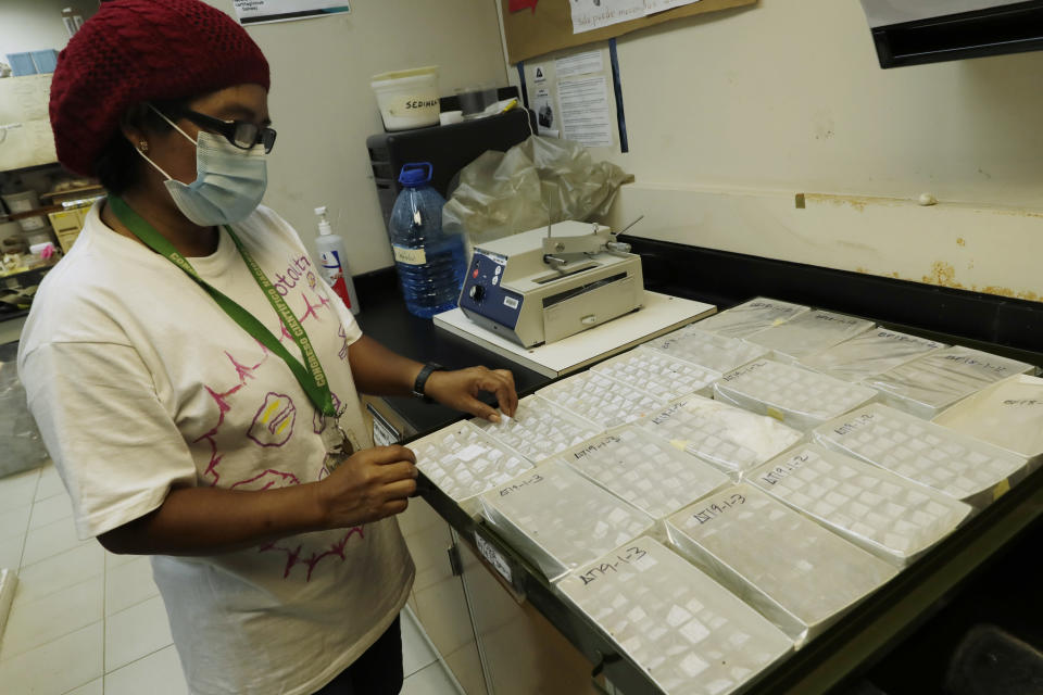 Researcher Brigida De Gracia of the Smithsonian Tropical Research Institute, holds a sample of fish otoliths at the Naos Marine Laboratories in Panama City, Wednesday, March 31, 2021, that she classified while in her home due to the COVID-19 pandemic lockdown. De Gracia studies otoliths, a tiny stone-like part of the anatomy of vertebrates found in their inner ear. In particular, De Gracias studies them in fish as part of her efforts to see how humans have been impacting fish over the past several thousand years. (AP Photo/Arnulfo Franco)