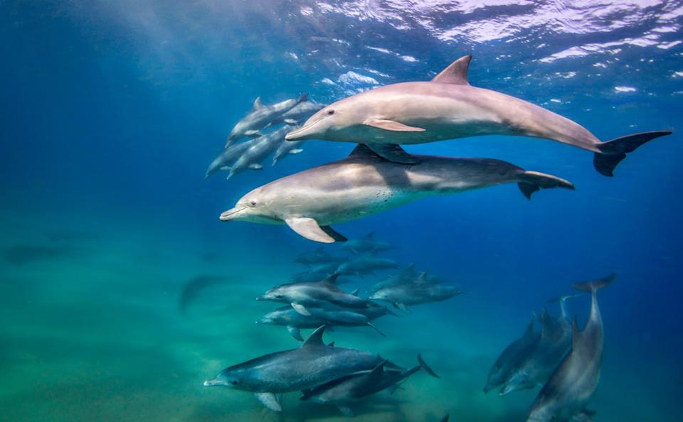 A pod of dolphins in Mozambique
