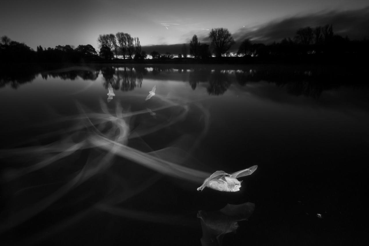 <p>This beautiful image captures Contrails at Dawn (Daubenton's bats) at Coate Water Country Park in Wiltshire — and it's simply breathtaking.<br></p>