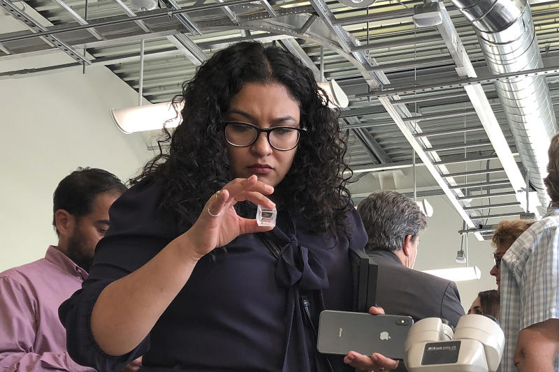 A woman looks at a sample of the Asian citrus psyllid during the opening of a new secure lab dedicated to the search for a cure for a deadly citrus-killing disease in Riverside, Calif., Thursday, Sept. 26, 2019. Funded by citrus growers and packers and in partnership with the University of California, Riverside, the lab will be used to conduct research on the citrus disease spread by the psyllid that has ravaged groves in Florida and abroad. (AP Photo/Amy Taxin)