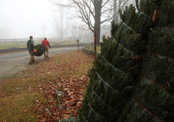 """<p><strong>Bethlehem, New Hampshire</strong> (November 23-December 15)</p><p>Guests describe <a href=""""http://therocks.org/harvest.php#harvest"""" rel=""""nofollow noopener"""" target=""""_blank"""" data-ylk=""""slk:The Rocks Christmas Tree Farm"""" class=""""link rapid-noclick-resp""""><strong>The Rocks Christmas Tree Farm</strong></a> as a real-life version of <em>A Norman Rockwell Christmas</em>. Enjoy roasting marshmallows and hopping along for a horse-drawn wagon ride during your visit. For those looking to extend their time in this winter wonderland, they offer a <a href=""""https://therocks.org/vacations.php"""" rel=""""nofollow noopener"""" target=""""_blank"""" data-ylk=""""slk:Christmas Memory Package"""" class=""""link rapid-noclick-resp"""">Christmas Memory Package</a> for a weekend getaway. </p>"""