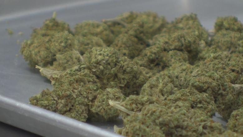 Delay in opening pot stores will allow fine tuning, corporation says