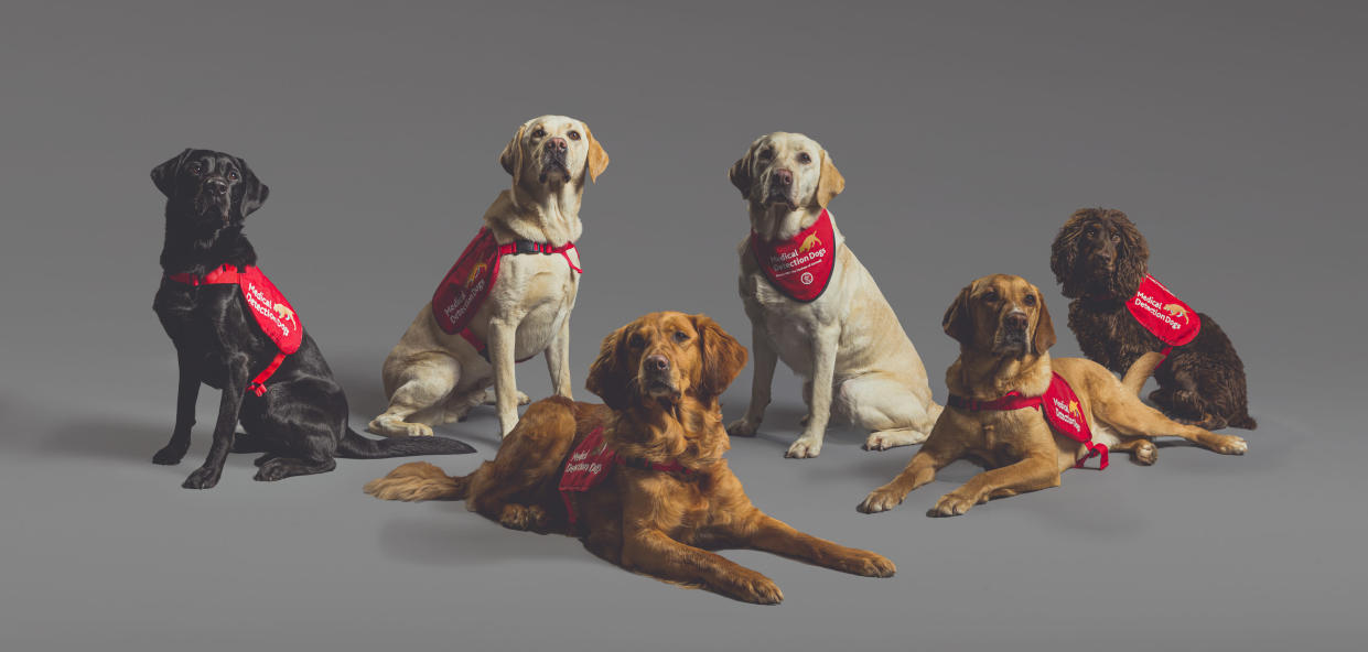 Six dogs tool part in the double blind trial to sniff out Covid-19