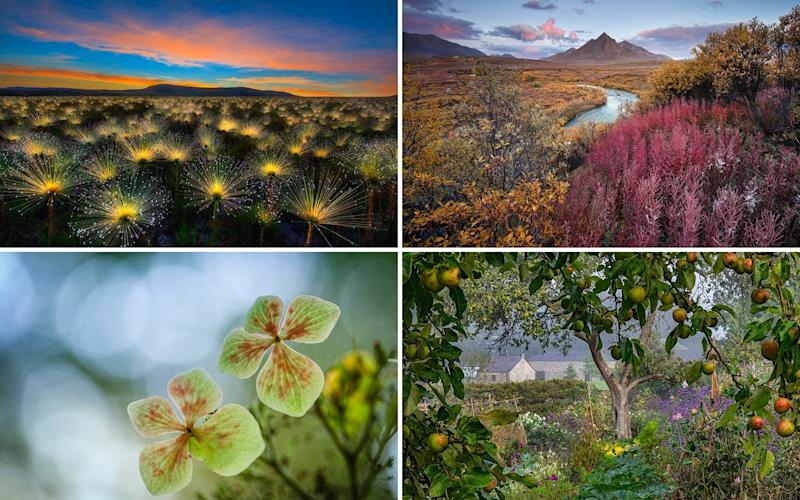 The International Garden Photographer of the Year category winners - Marcio Cabral,Andrea Pozzi,Yang Yu Wei,Nigel McCall