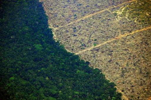 Rainforests harbour the richest diversity of wildlife on Earth