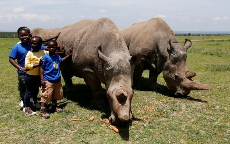 FILE PHOTO: Children pose for a photograph next to Najin and her daughter Fatou, the last two northern white rhino females, as they graze near their enclosure at the Ol Pejeta Conservancy in Laikipia National Park