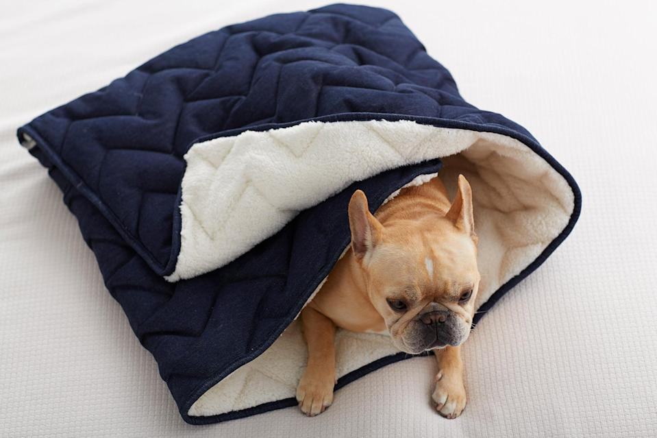 """<p>If your quaran-team includes a dog or cat that loves to burrow under the covers, then treat your fur baby to this cozy, Sherpa-lined <a href=""""https://the-company-store.7eer.net/c/249354/219128/3509?subId1=EWSpreadthelovewithEWsValentinesDaygiftguidemorganlLifGal29198614202101I&u=https%3A%2F%2Fwww.thecompanystore.com%2Fpet-supplies%2Fdenim-pet-sleeping-bag%2F97006.html"""" rel=""""nofollow noopener"""" target=""""_blank"""" data-ylk=""""slk:sleeping bag"""" class=""""link rapid-noclick-resp"""">sleeping bag</a> from the Company Store.</p> <p><strong>$54-$64, <a href=""""https://the-company-store.7eer.net/c/249354/219128/3509?subId1=EWSpreadthelovewithEWsValentinesDaygiftguidemorganlLifGal29198614202101I&u=https%3A%2F%2Fwww.thecompanystore.com%2Fpet-supplies%2Fdenim-pet-sleeping-bag%2F97006.html"""" rel=""""nofollow noopener"""" target=""""_blank"""" data-ylk=""""slk:thecompanystore.com"""" class=""""link rapid-noclick-resp"""">thecompanystore.com</a></strong></p>"""