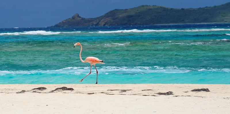 A flamingo walks along the beach on Necker Island in the British Virgin Islands, Friday, May 17, 2013. Richard Branson, the adventuring CEO and founder of the Virgin Group of companies is co-hosting a two-day meeting at Necker Island, his home in the British Virgin Islands, where he has developed an ultra-exclusive eco-resort that showcases renewable energy technology, reintroduced flamingoes, imported lemurs and other creatures. (AP Photo/Todd Vansickle)
