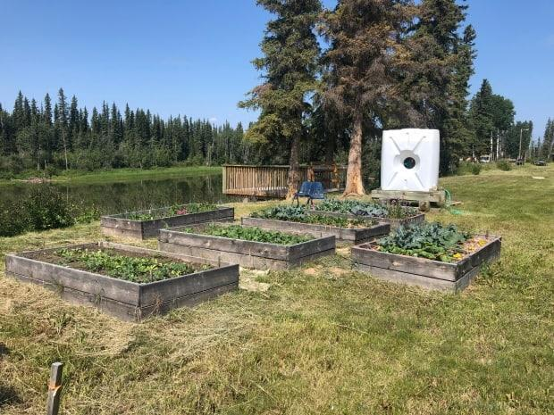 People in Kakisa are using raised garden beds to grow food.