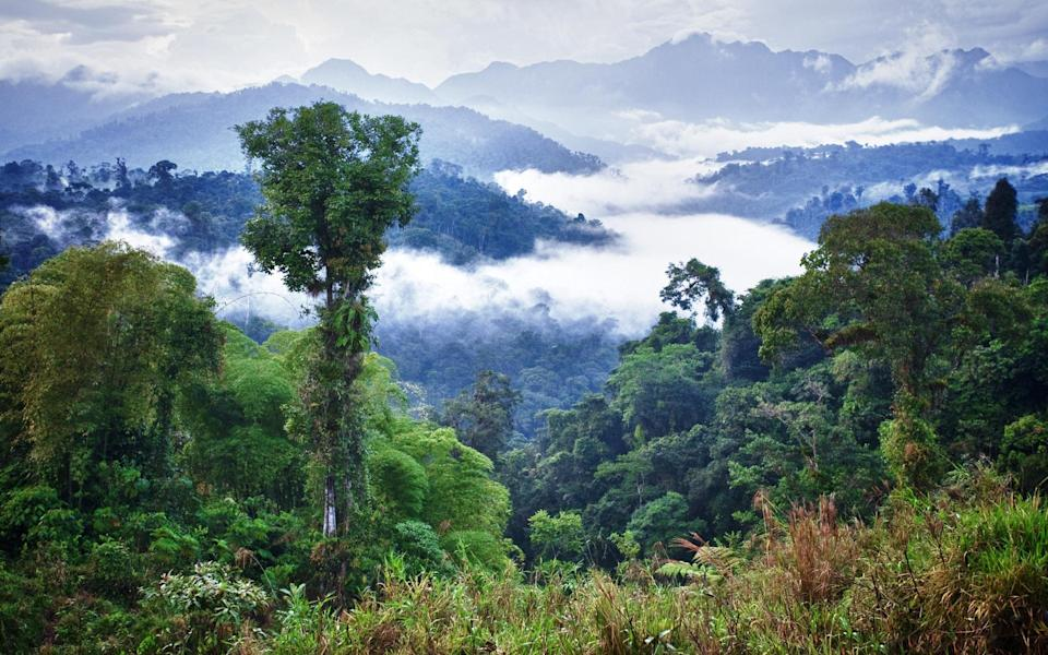Delve deep into the rainforest by canoe - GETTY