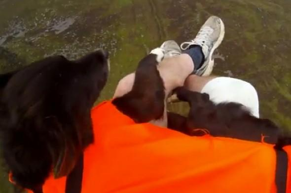 Watch: The fur flies as dog does tandem paraglide down Slieve Donard