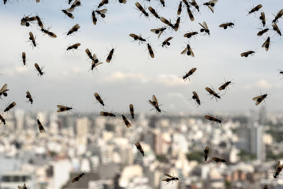 Flying Ant Day has arrived, here's how to prevent any unwelcome visitors [Photo: Getty]