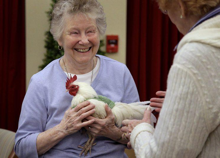 """Retiree Barbara Stevens holds rooster """"Prince Peep,"""" who is wearing one of the sweaters knitted for him. (Photo: AP/Steven Senne)"""