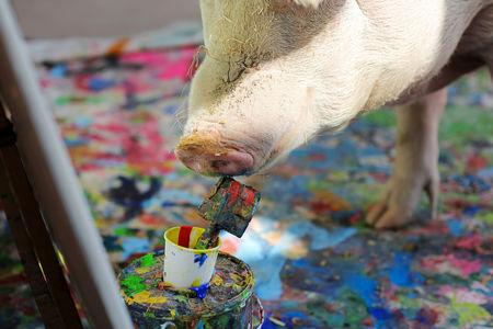 FILE PHOTO: Pigcasso, a rescued pig, paints on a canvas at the Farm Sanctuary in Franschhoek, outside Cape Town, South Africa February 21, 2019. REUTERS/Sumaya Hisham